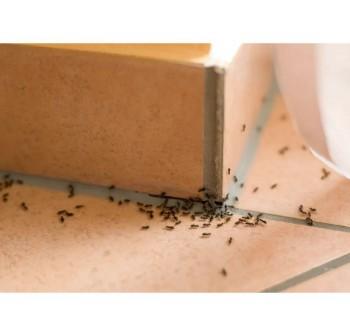PESSO Eco Ant Repellent 500ml